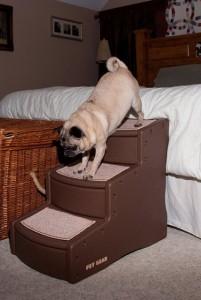 Pet Gear Easy Step III