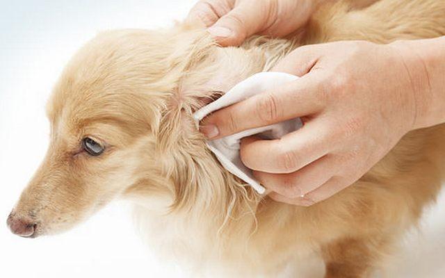 Remarkable New Natural Dog Ear Wash Released