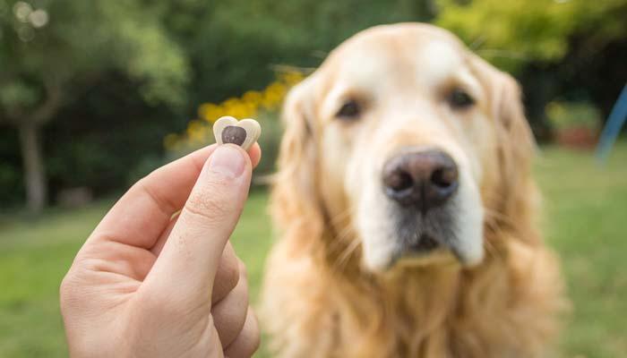 What dog treats work best