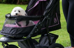 Why You Should Be Proud of Your Dog Stroller