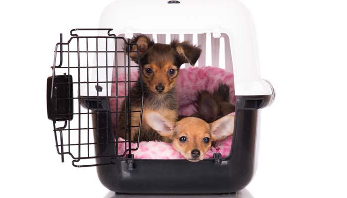 housebreaking using dog crate training