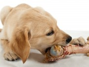 Are Raw Bones Good for Dogs