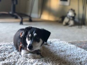 Carpeting and Flooring for old dogs