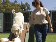 How to Write a Dog Boarding Business Plan
