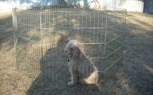 Why Your Dog Needs a Playpen