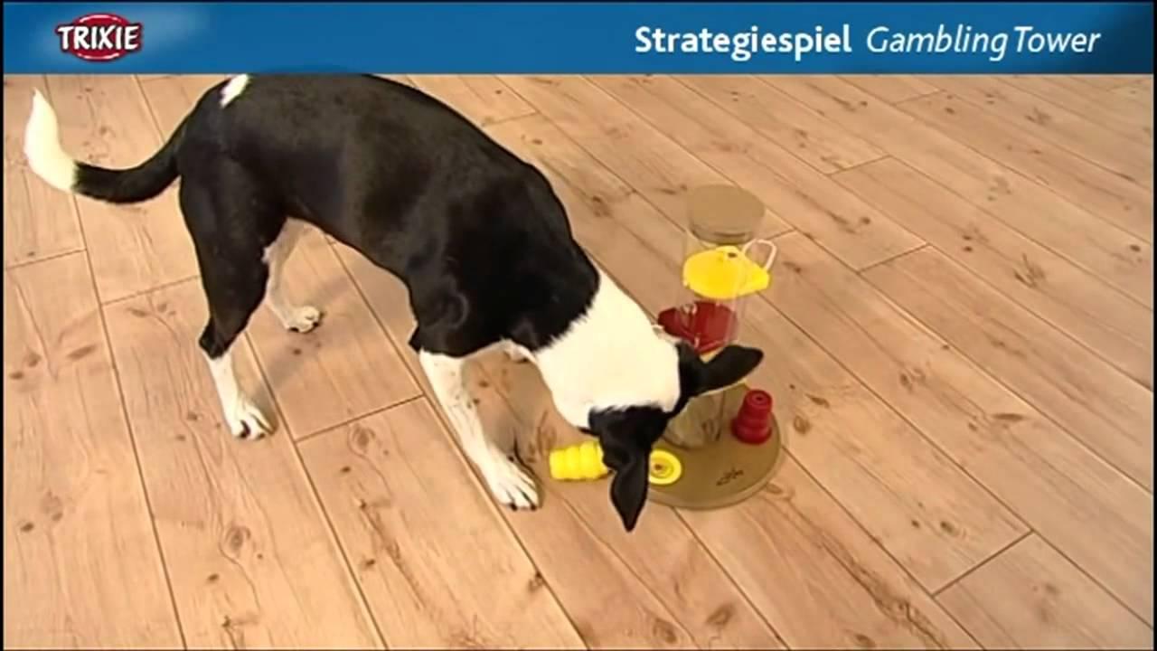 Trixie dog activity gambling tower shooting star and casino mahnomen mn