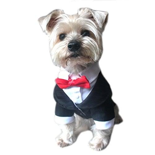 Best Dog Costumes