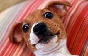 Alabama Humane Society Kicks Off 'Selfie September'