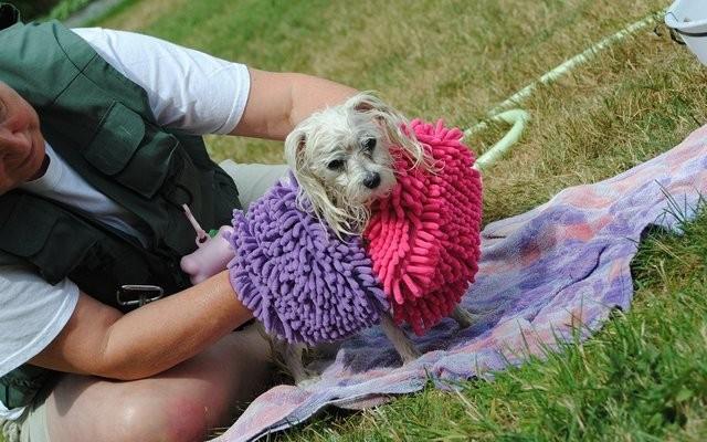 BoTy Dogs Releases New Clean N Pamper Bundle