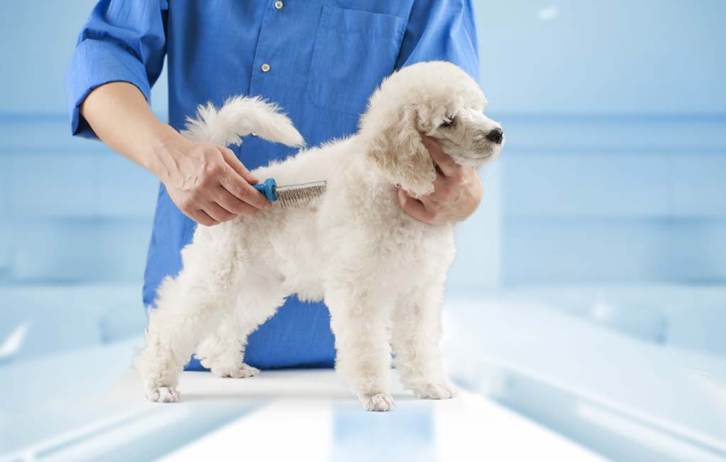Dog Grooming Basics  For Pet Groomers