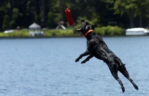 Illinois Couple Trains Award-Winning Dogs