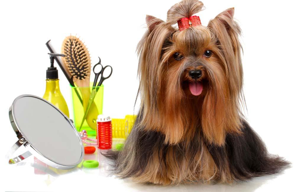 Bio-Groom Waterless Pet Shampoo – Item of the Day