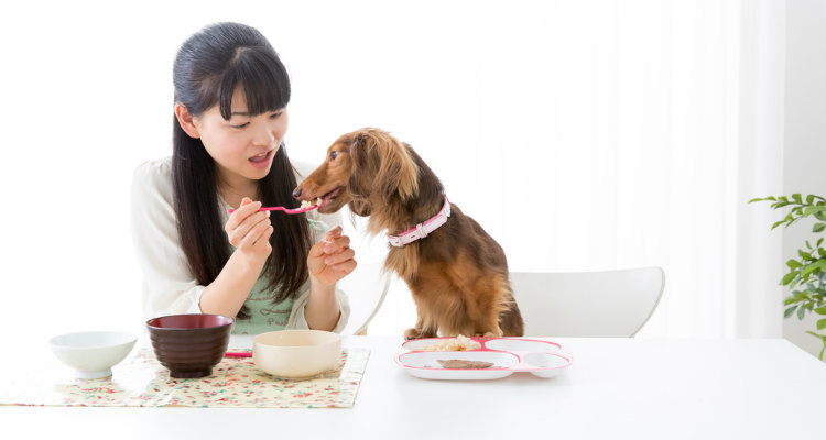 Should Your Dog Eat People Food