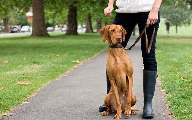 Sick Puppy Motivates Entrepreneur To Start Her Own Pet Sitting Business