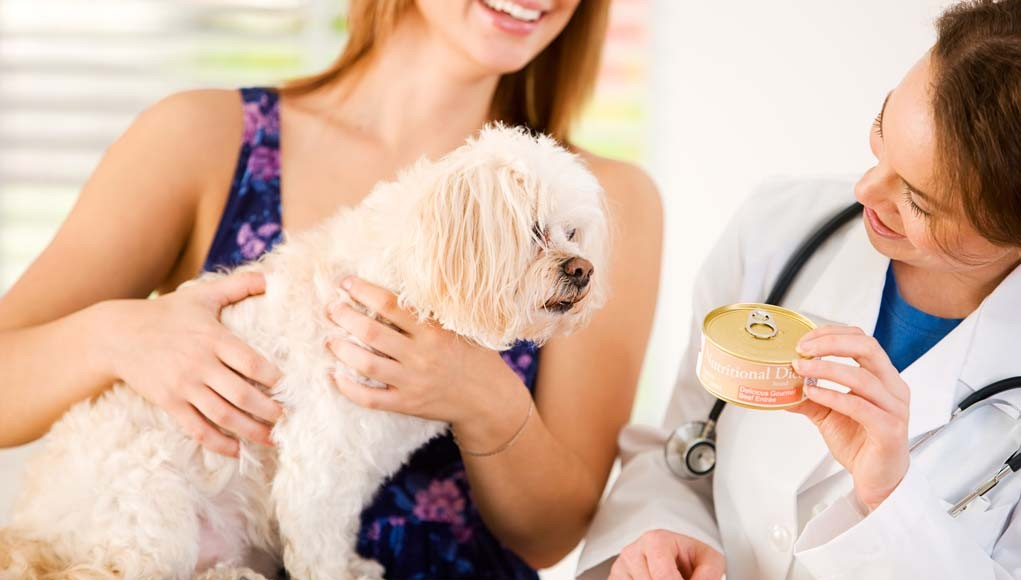 Vet Recommended Dog Food Brands