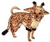 Best Dog Halloween Costumes