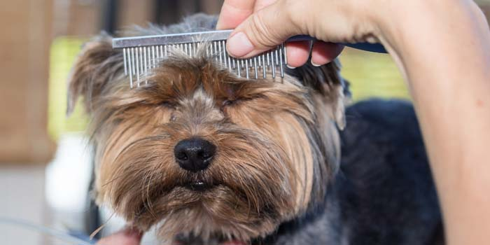 Are Premium Dog Hair Clippers Worth It