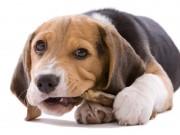 Best Bones For Dogs