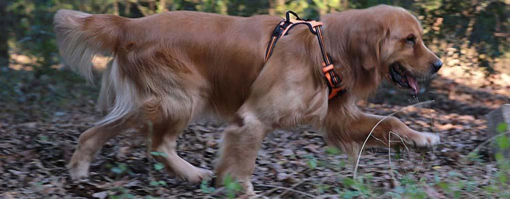 Best Dog Harnesse