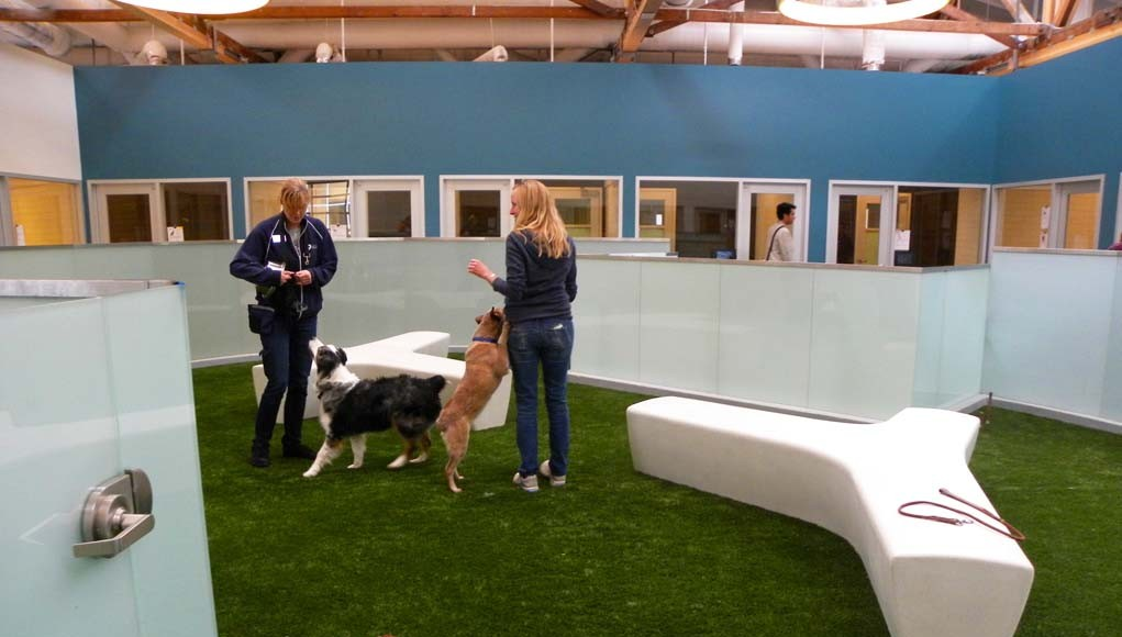 How To Start An Indoor Dog Park Top Dog Tips