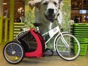 SamSam Sidecar