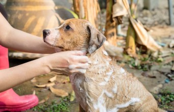 Step by Step - How to Bathe A Dog At Home Correctly