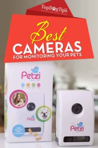 Picking the Best Dog Cameras With Treat Dispenser