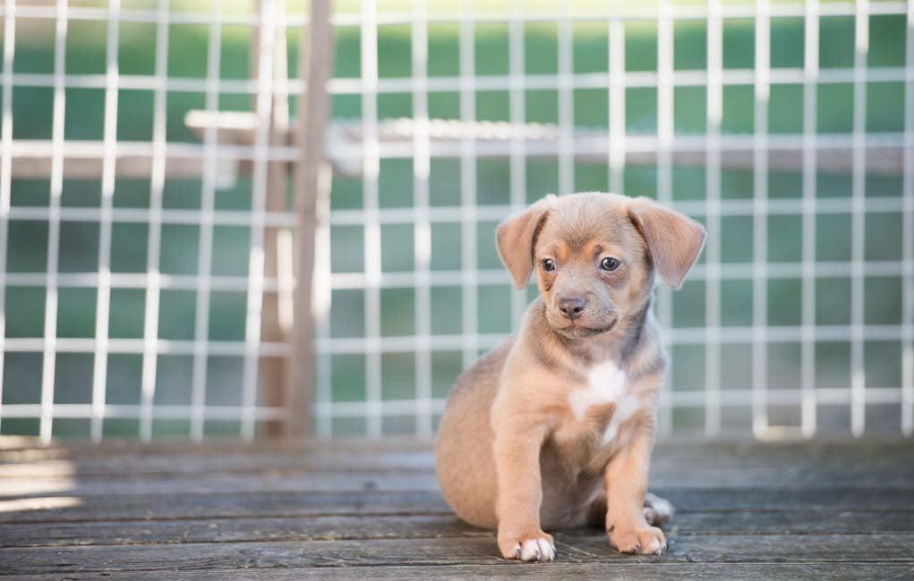 dog neuter cost