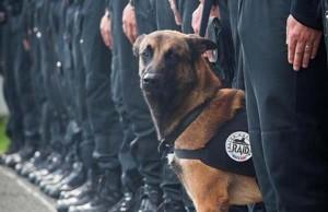 Dog Dies on Duty