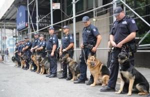 Indiana Shelter Dog Becomes Iowa Police K-9