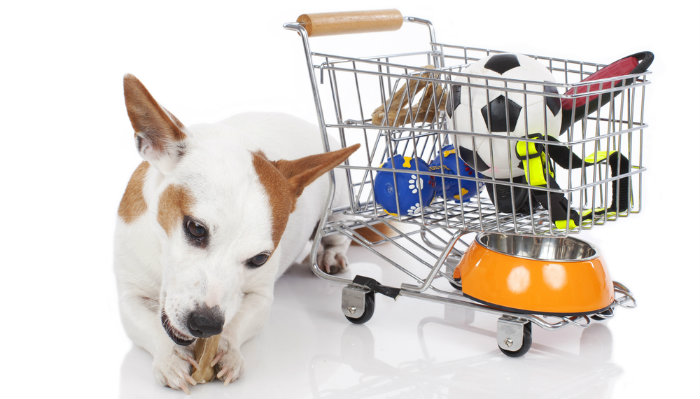 on a budget what are the best places to find cheap dog products