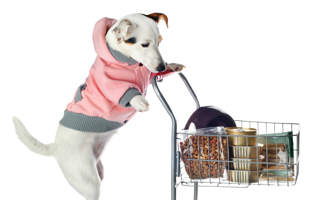 Pets On A Budget What S The Best Place To Buy Cheap Dog Supplies