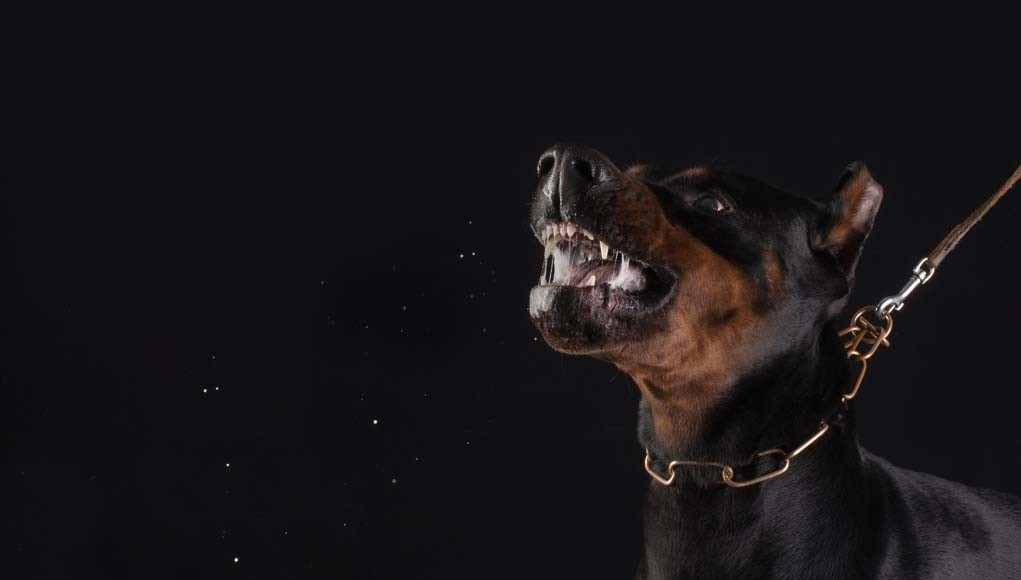 most scary dogs - aggressive and dangerous dog breeds