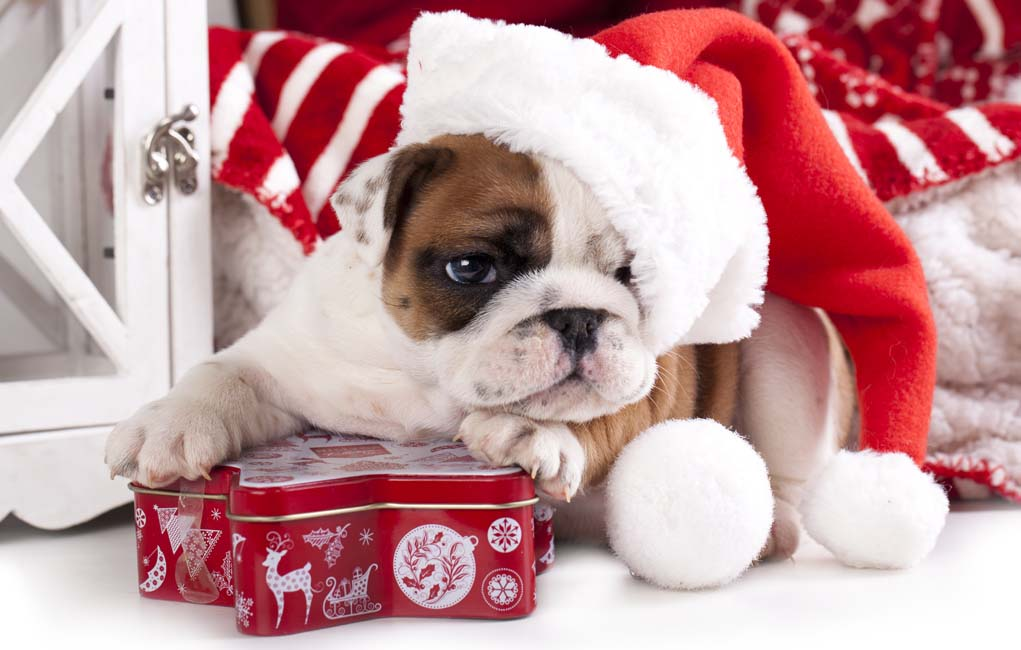7 Best Christmas Gifts for Dogs That Will Last Until the Next Year