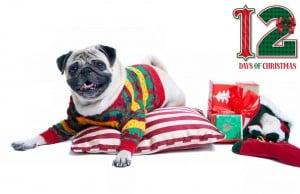 Best Dog Supplies Deals - 12 Days of Deals and Christmas