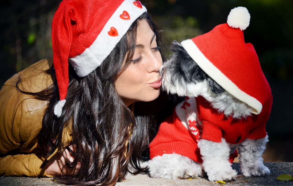 Let 39 S Talk Last Minute Christmas Diy Gifts For Dog Lovers