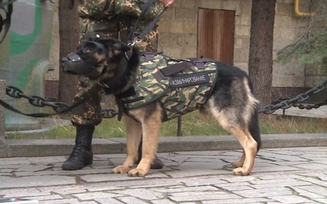 Russia Releases Dog Armor After French Police Dog Killed in ISIS Raid
