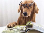 10 Best Dog Magazines of 2020
