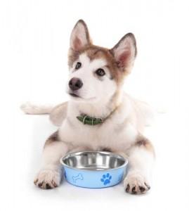 Best Dog Food for Huskies Pets