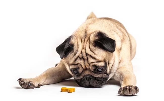 Top 9 Best Healthy Dog Treats of 2018 allnatural organic ingredients