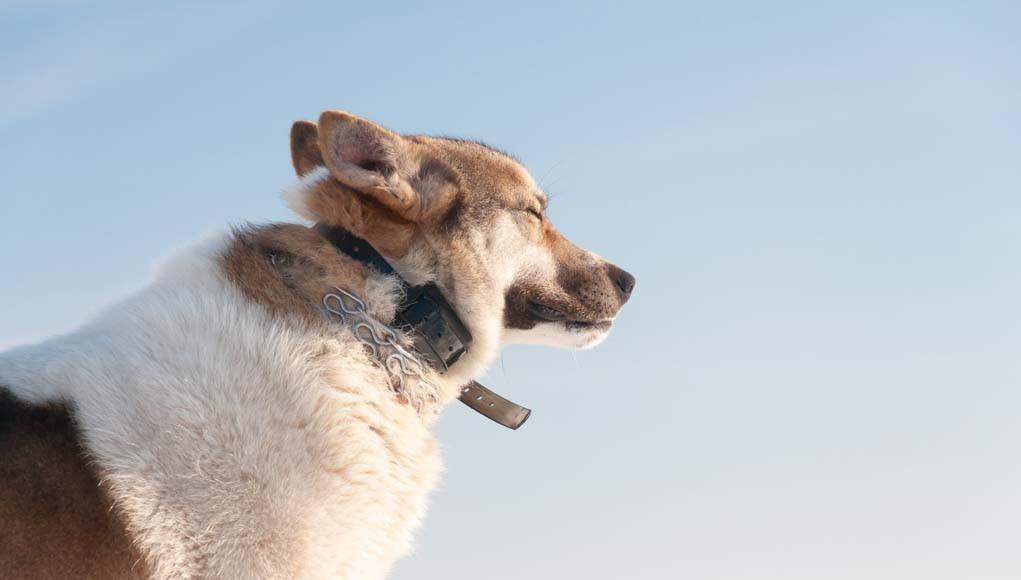 Electronic Dog Training Collars - A Controversial Dog Training Method
