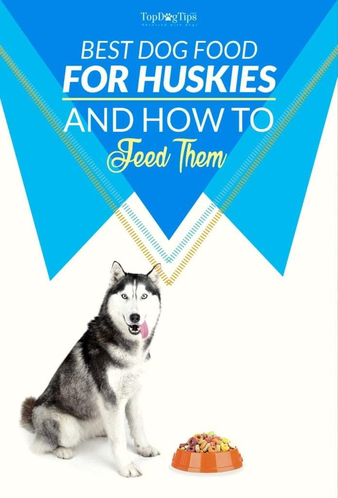 Vet Recommended Best Dog Food for Huskies
