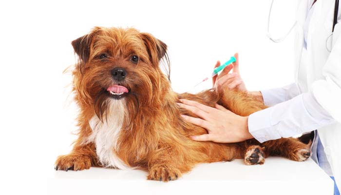 What Shots Do Puppies Need - Dog Vaccination Schedule