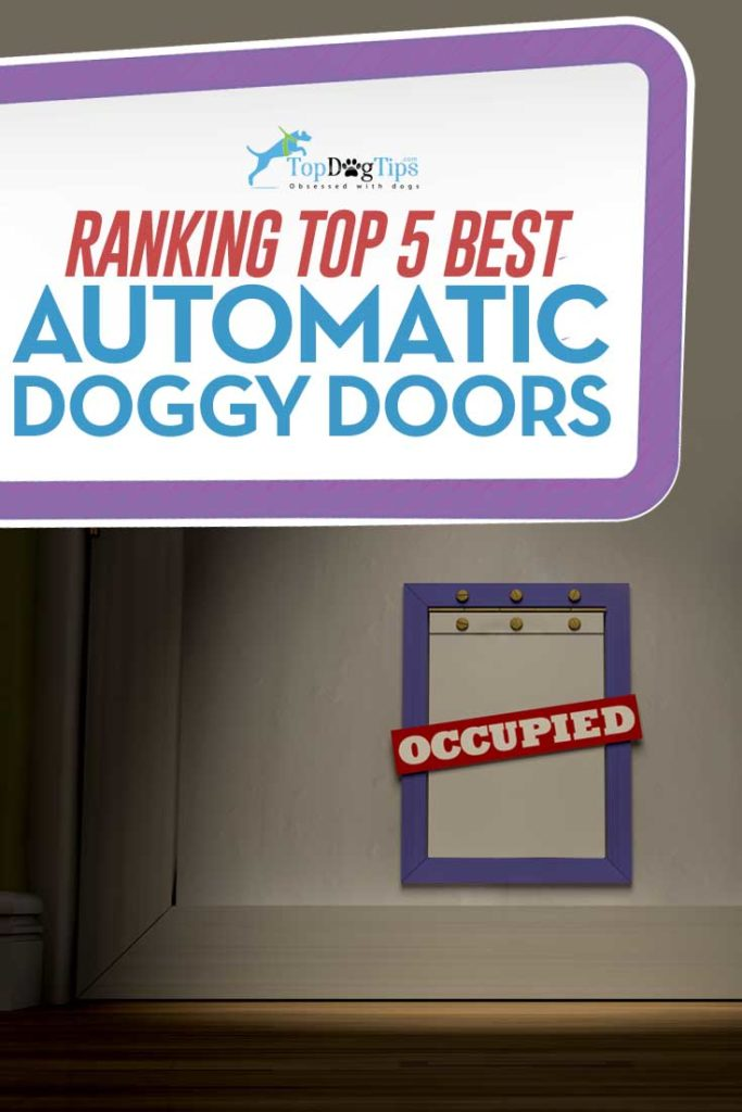 Best Automatic Dog Doors for Your Home