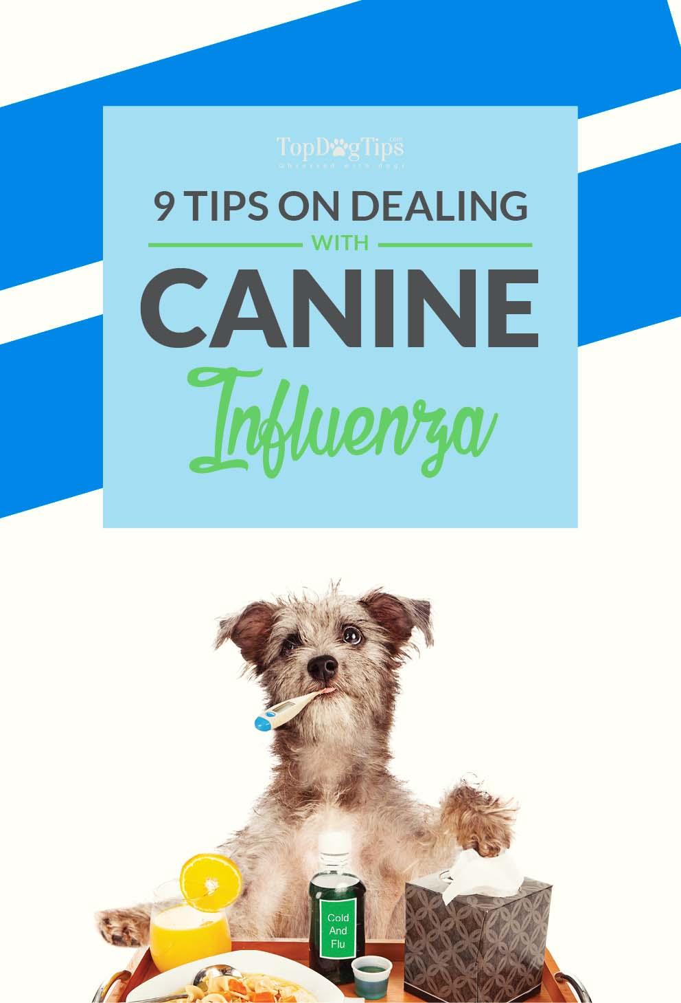 Canine Influenza Advice
