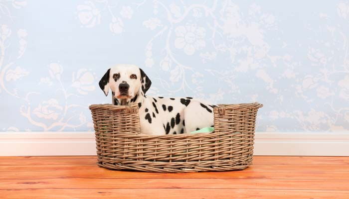 DIY Dog Bed Project - Ideas from Around the Internet for Pets