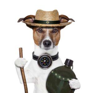 Dog Hiking Leash and Clothing