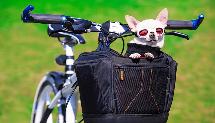Top 5 Best Dog Basket For Bike Bicycle Carriers For Dogs In 2017