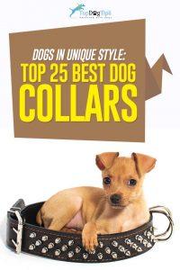 Top Best Cute Dog Collars