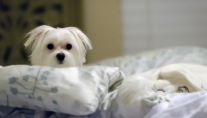 Want Better Sleep Let your Dog In the Bed